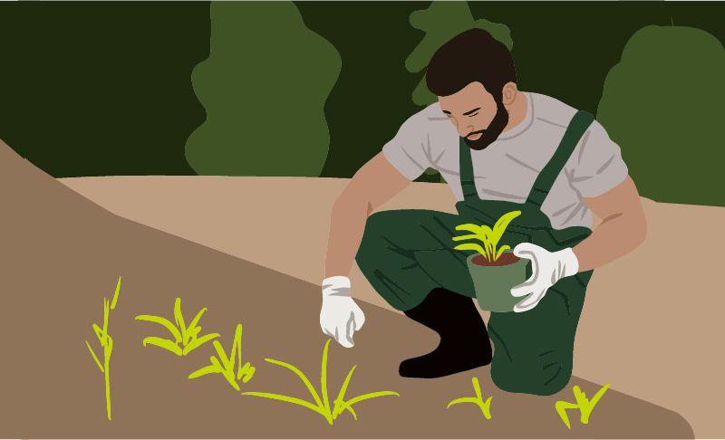 Fernstudium Agrarwirtschaft