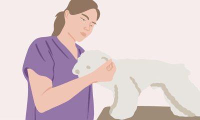 Fernstudium Tierheilpraktiker