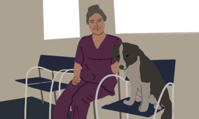 Tiermedizinische Fachangestellte Weiterbildung
